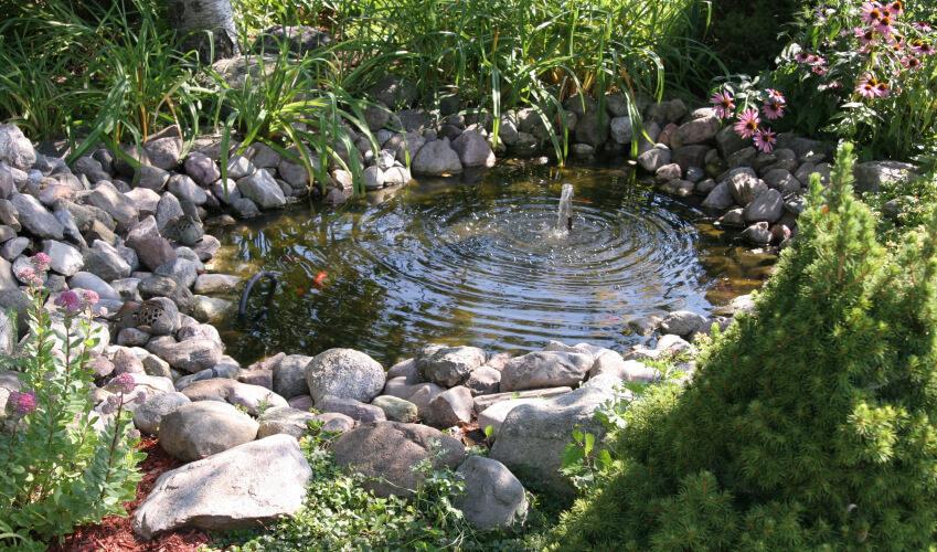 2 backyard pond feb20